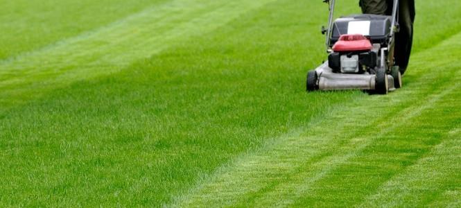 Comment bien tondre sa pelouse for Tonte jardin